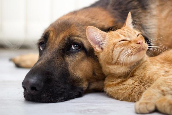 5 เหตุผลฟิน ๆ ที่ควรเลี้ยงน้องหมา น้องแมว